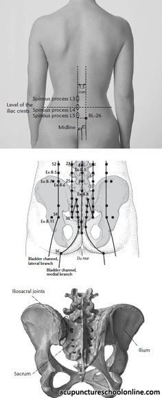 Gate of Origin Shu GUANYUANSHU - Acupuncture Points] cun lateral to the posterior midline, on the level of the lower border of the spinous process of the lumbar vertebra Meridian Acupuncture, Acupuncture Points, Acupressure Points, Acupressure Treatment, Spine Health, Reflexology Massage, Muscle Anatomy, Massage Techniques, Anatomy And Physiology