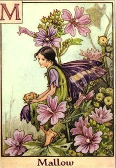 """pagewoman:  """" The Mallow Fairy  by Cicely Mary Barker  """""""