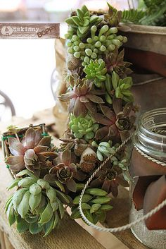Sucker for succulents- a DIY Succulent Wreath Tutorial - Unskinny Boppy