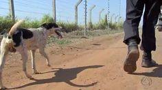 """""""O Grito do Bicho"""": Cão esquecido em carro acidentado passa a morar no..."""