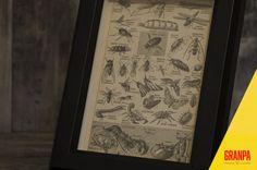 Illustrazione insetti primi '900 con cornice di GRANPAstudio