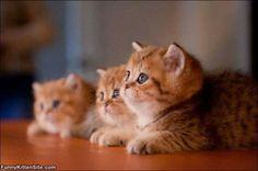 Awww Chubby lil babies!