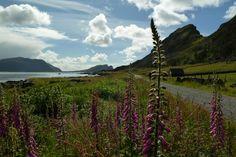 Runde Vogelinsel Vogelfelsn Der Weg ist das Ziel Norge Norway Norwegen