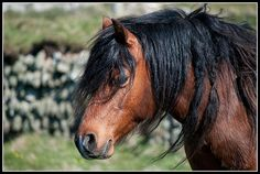 Bay horse in Wales