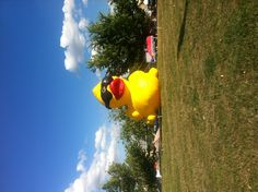 Rubber Duckie!!! My sister would go crazy