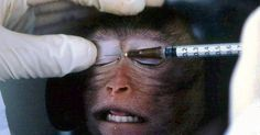Detengan la experimentación con animales! FIRMA Y COMPARTE ESTA PETICIÓN AHORA!