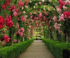 """Arbor... Gorgeous! Whoa! WAY out of my league from a """"gardener"""" standpoint, but fun to daydream! *Reminds me of """"We're Painting the Roses Red"""" from Alice in Wonderland"""