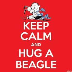 Keep calm and hug a beagle!