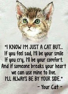 Cat Care Kittens You'll always be in my heart Tigger Trixie Tobie Jimmie Spanky Rudy a - Funny Cat Quotes I Love Cats, Crazy Cats, Cute Cats, Funny Cats, Funny Animals, Cute Animals, Wild Animals, Adorable Kittens, Jungle Animals