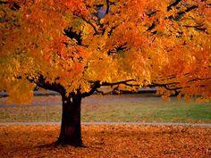 Herfstblad en lage zon gevaarlijk in verkeer