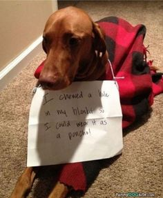 Dog Shaming features the most hilarious, most shameful, and never-before-seen doggie misdeeds. Join us by sharing in the shaming and laughing as Dog Shaming reminds us that unconditional love goes both ways. Funny Dog Pictures, Animal Pictures, I Love Dogs, Puppy Love, Vizsla Puppies, Weimaraner, Dachshunds, Cute Funny Dogs, Funny Pets