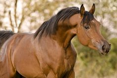 Love the shape of the head of the Arabians