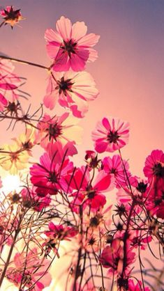 Pink flower wallpaper flowers nature wallpapers for free download