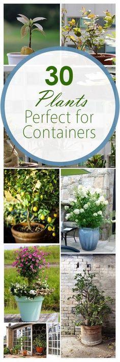 Container gardening, gardening hacks, popular pin, growing veggies in containers, flower garden, porch decorations, DIY porch decor.