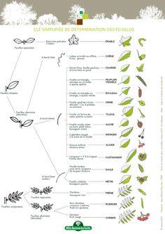 Je vous présente deux solutions très simples pour reconnaître n'importe plantes en forêt ou dans la nature.