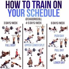 beginner's bodybuilding program  exercise  gym workouts
