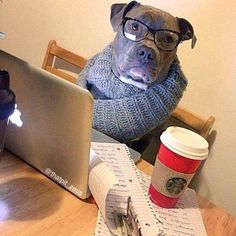 #Funny And #Cute #Dogs Photos For #Dog #Lovers #2 (25 Pics)