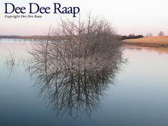Reflections on a farm lake in South Dakota.