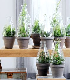 Plants in glass - Hipster green - heart for INSPIRATION - PlantPoint