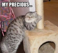 Cat loves his scratching post