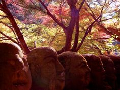 Kyoto, Japan 紅葉絵巻