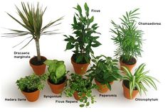 22 Plants That Can Actually Purify Your Indoor Air The Plant Air Purifier trumps each one of the competition since it never needs filter replacement,