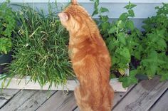 Pet Friendly Gardens and Landscaping | Plants that are poisunous to your pets.