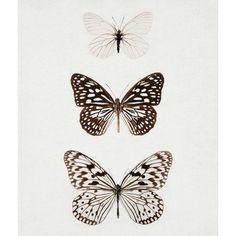 Monochrome butterflies