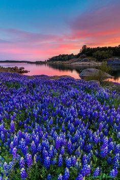 Spring wonderland by Liping Yu ~ Folsom lake, California, USA Beautiful World, Beautiful Places, Beautiful Flowers Pics, Folsom Lake, California Wildflowers, Nature Scenes, Amazing Nature, Pretty Pictures, Garden Inspiration