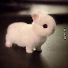 Baby Netherlands dwarf bunny is too fluffy!  http://9gag.com/gag/a9P5LQZ?ref=tp…