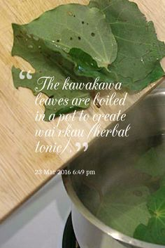how to make healing kawakawa tea, or you can buy from us in a range of forms for different uses