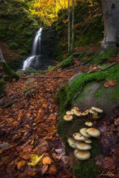 Virgin Forest Frakto by Dimitrios Katrantzis on 500px..... #autumn #landscape #forest #water #nature #greece #mushrooms #drama #waterfalls