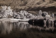 Bill Gracey posted a photo:  Taken on a recent walk, on a day with good clouds, at Santee Lakes. This has all of the elements that I like to have in an infrared image - clouds, sky, water, and vegetation.  This is an infrared image taken with my converted Nikon D300 camera. I've been taking infrared photographs for more than 15 years, and with a total of 3 different cameras. It's much easier to take infrared images digitally that it was in the film days. If you like this look, I have an…