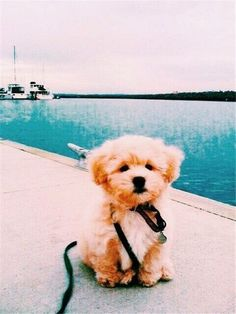 ✔ Cute Puppies Tiny Baby - Animals--Dogs and Puppies Baby Animals Pictures, Cute Animal Pictures, Dog Pictures, Tiny Puppies, Cute Dogs And Puppies, Dalmatian Puppies, Havanese Puppies, Cute Puppies Images, Cute Animals Puppies