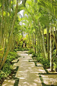 Wonderful Tropical Garden Pathway Landscape - Looking for a Various Garden Pathway Landscape Tropical Backyard Landscaping, Modern Landscaping, Front Yard Landscaping, Landscaping Ideas, Landscaping Software, Tropical Patio, Courtyard Landscaping, Landscaping Contractors, Modern Courtyard