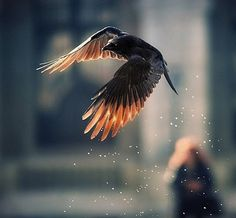 """""""...And once you have tasted flight, you will walk the earth with your eyes turned skywards, for there you have been, and there you long to return..."""" - Leonardo da Vinci"""