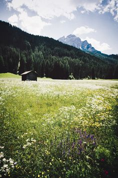 Ana Rosa, elenamorelli: { mountain meadow }