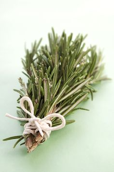 rosemary - I always forget I have so much of it in the garden.