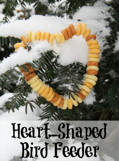 Don't forget the birds this Valentines Day. Make a simple heart shaped bird feeder craft