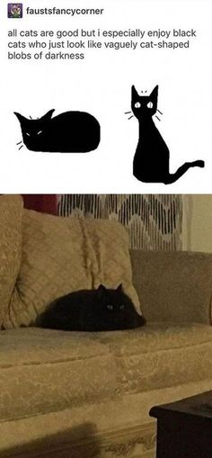 Our Black cat prefers to lay down in Black spots so you won't see him at all. Our Black cat prefers to lay down in Black spots so you won't see him at all. Funny Animal Memes, Cute Funny Animals, Funny Cute, Cute Cats, Funny Memes, Jokes, Adorable Kittens, Animals And Pets, Baby Animals