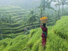 Avec 20 000 sanctuaires et des paysages à couper le souffle, l'île hindoue de Bali semble bénie par le destin. Et ensorcelle le visiteur.
