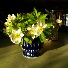 White anemones in old Arabia's Valencia creamer designed Ulla Procope.
