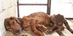 STOP BOSNIA-HERZEGOVINA FROM IMPLEMENTING KILL-LAW AMENDMENTS TO THEIR ANIMAL WELFARE ACT