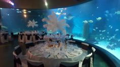 Weddings at Melbourne Aquarium