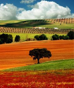 Portugal, Alentejo, nature, architecture and for wine lovers! Places In Portugal, Visit Portugal, Spain And Portugal, Portugal Travel, Beautiful Places To Visit, Beautiful World, Places To Travel, Places To See, Monsaraz