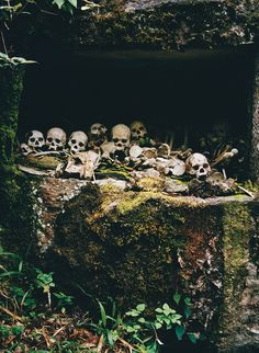 Displays of death are part of life in Sulawesi's Tana Toraja, where even the majority Christian population practices animism and believes that ancestors continue to influence the living longafter they're gone.