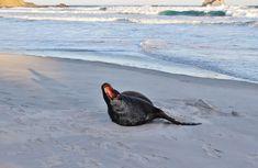 20 Amazing New Zealand Destinations Not To Miss - This Wild Life Of Mine New Zealand Destinations, Big Draw, Destin Beach, Wildlife, Amazing