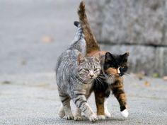 Streuner aufnehmen? Was für und gegen wild lebende Katzen spricht – Foto: Shutterstock / Seiji www.einfachtierisch.de