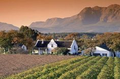 Goal: Weekend trip to Cape Town. Goal: To stay at a wine farm. Stellenbosch is in the winelands of Cape Town South Africa and is so beautiful. South Africa Safari, Cape Town South Africa, Namibia, Le Cap, Overseas Travel, Africa Travel, Travel And Leisure, Day Trip, Places To See