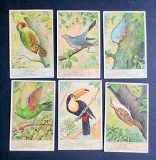 Figurine LIEBIG - Uccelli rampicanti - Rif.  N° 1365